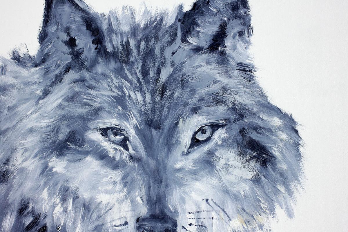 Wilk bieszczadzki