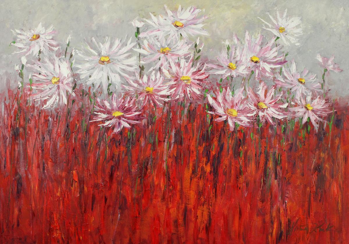 Rumianki biało-czerwone